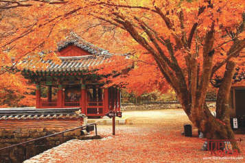 Naejangsan National Park Fall Leaves Tour